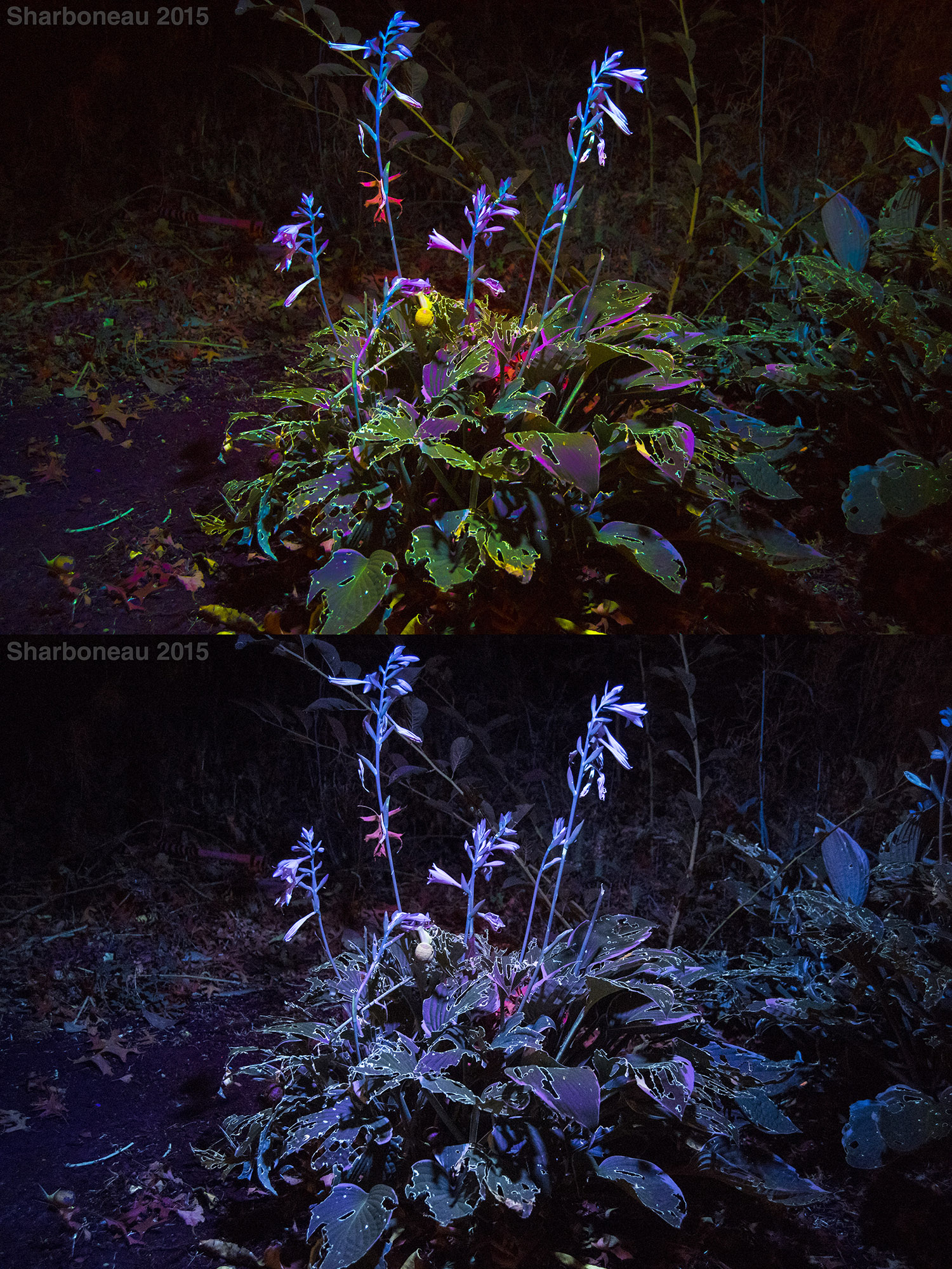 Here are two photographs showing two different white balance standards I use. The top image has a warmer custom white balance (~10,000K), while the bottom image has the white balance set to Daylight (~5,00K).